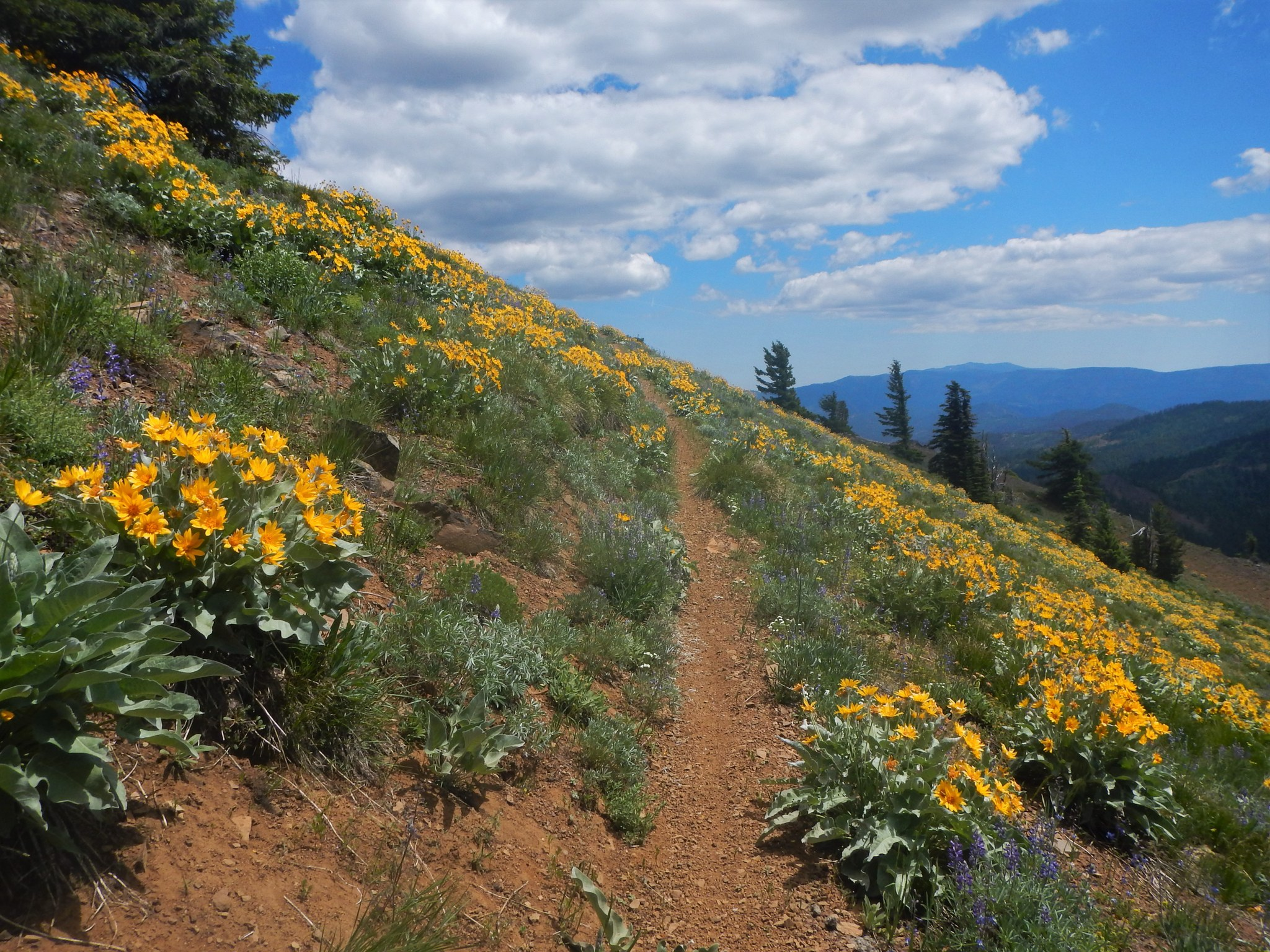 Miller Peak by Anna Roth.jpeg