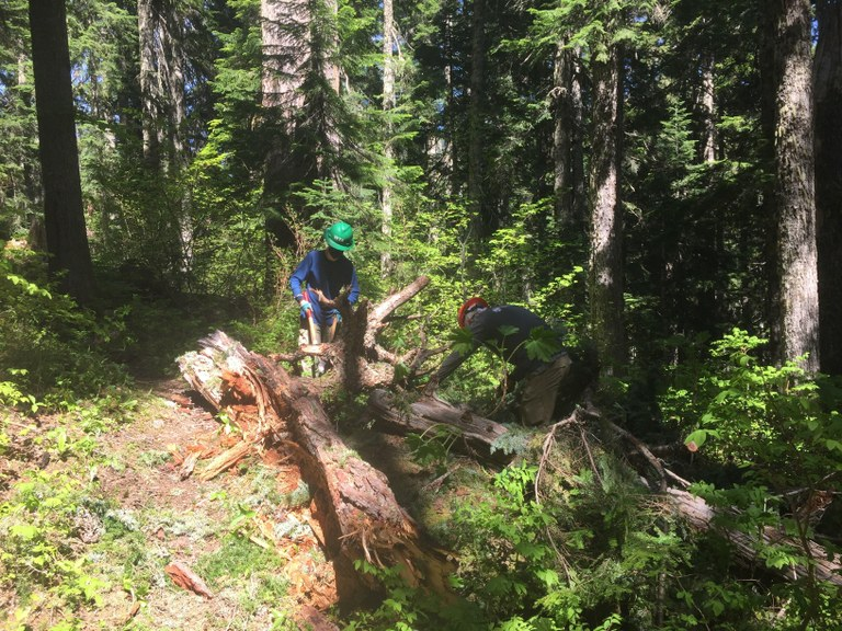 Volunteers do trail work along the North Fork Skykomish Trail. Photo by Nate Schmidt.