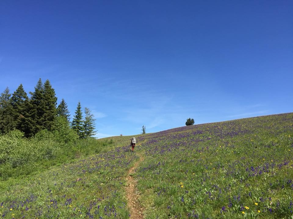 Packers Trail - Mount Misery by BYOC.jpeg