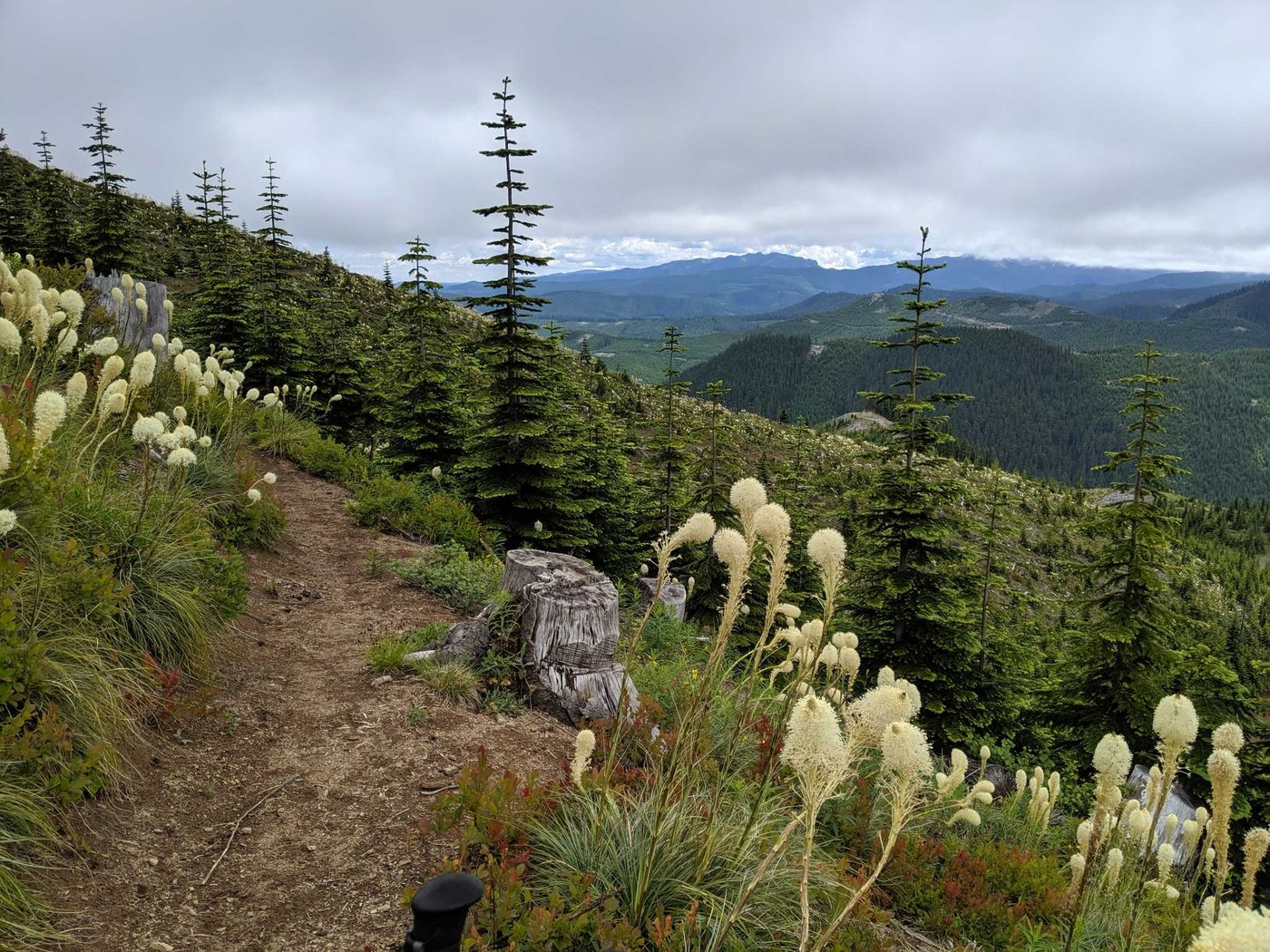 Bear Grass blooming along the trail overlooking the hills beyond.