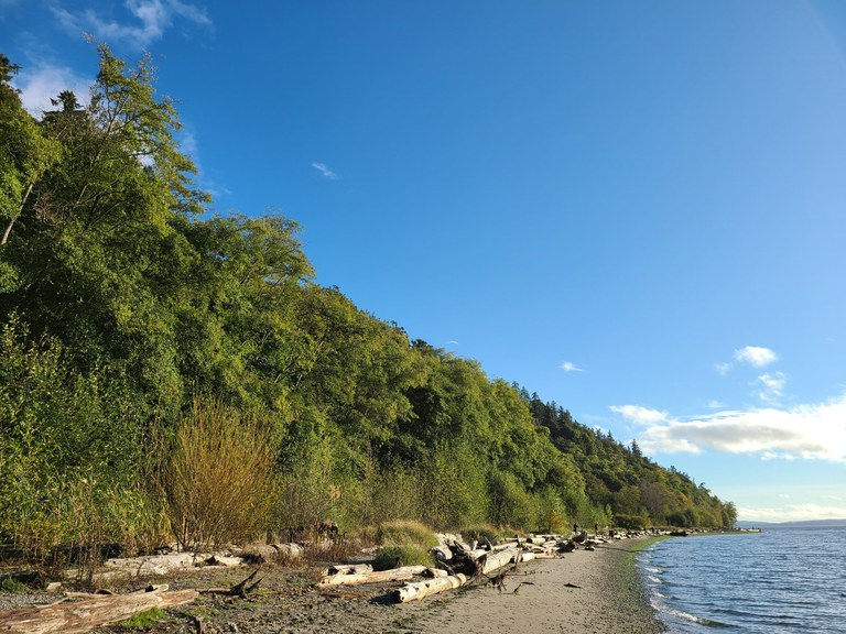 A curving stretch of beach fringed by a green forest.