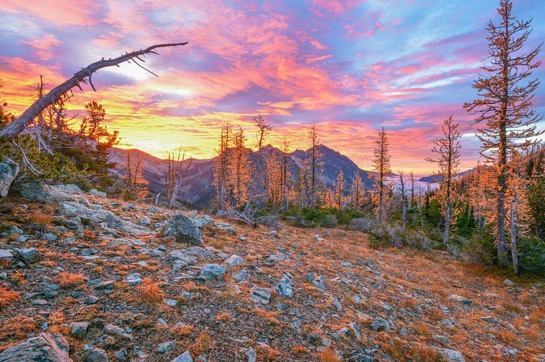 larches in the foreground with a sunset in the background. Photo by KRad.