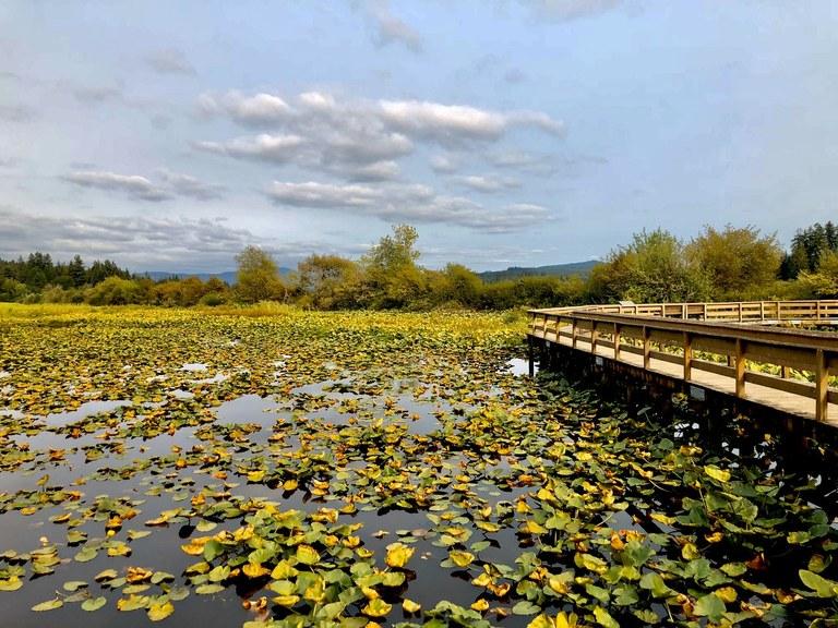 Silver Lake at Seaquest State Park. Photo by Liz M.