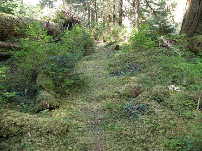 A section of trail being overtaken by vegetation. Photo by CP.