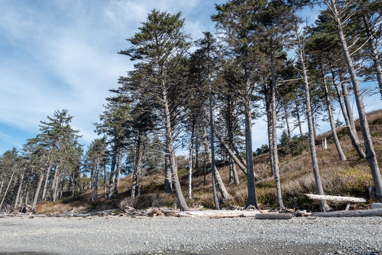 Trees lined up along Ruby Beach. Photo by ejain.