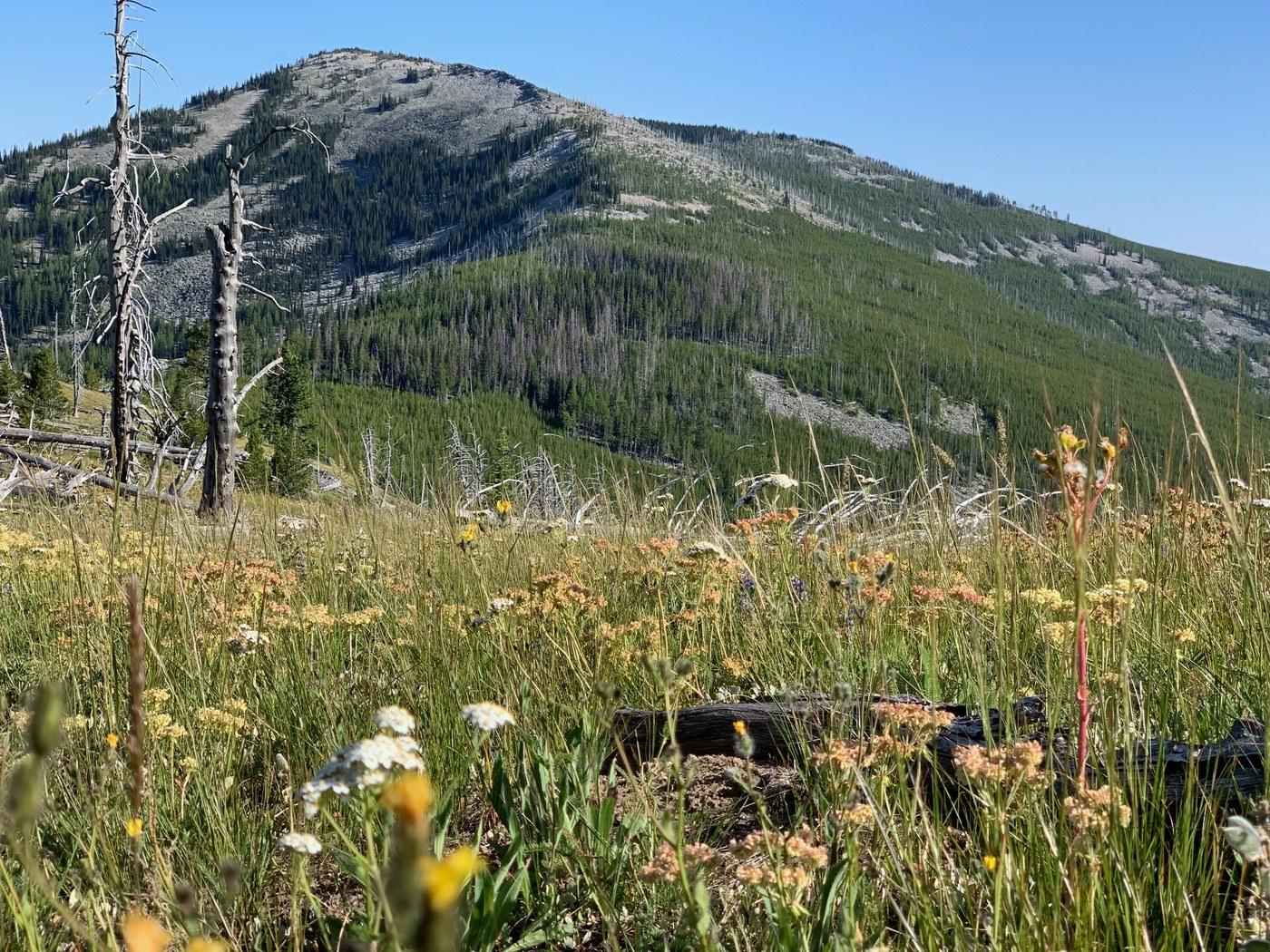 White Mountain. Photo by Karen Daubert.jpeg