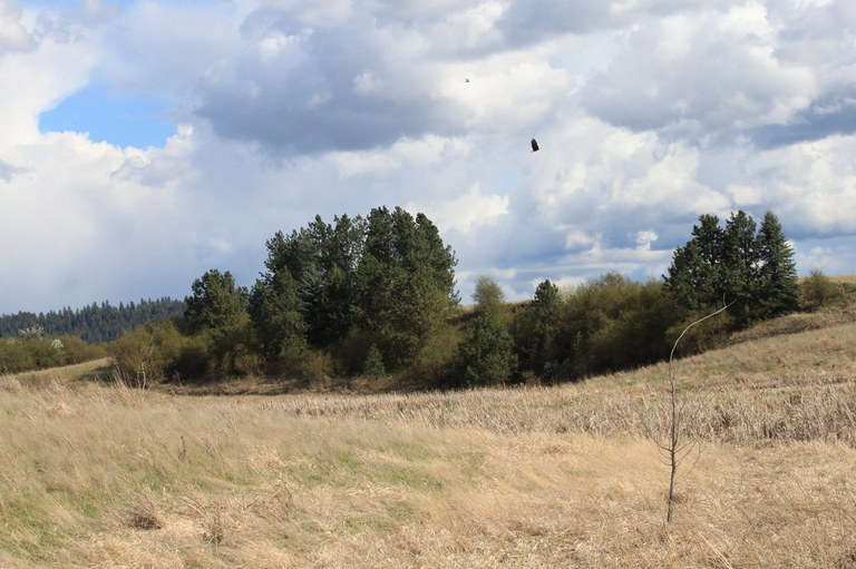 Bald Eagle at Feryn Ranch Conservation Area. Photo by Holly Weiler.