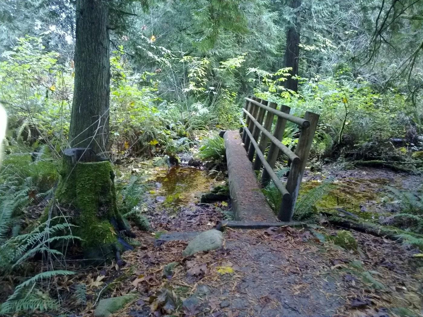 A log bridge crosses a small creek. Photo by whitebark.