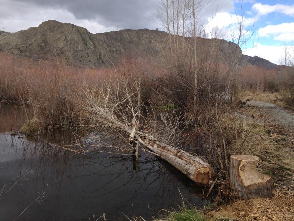 Beebe Creek Wildlife Area Photo by austineats.jpeg