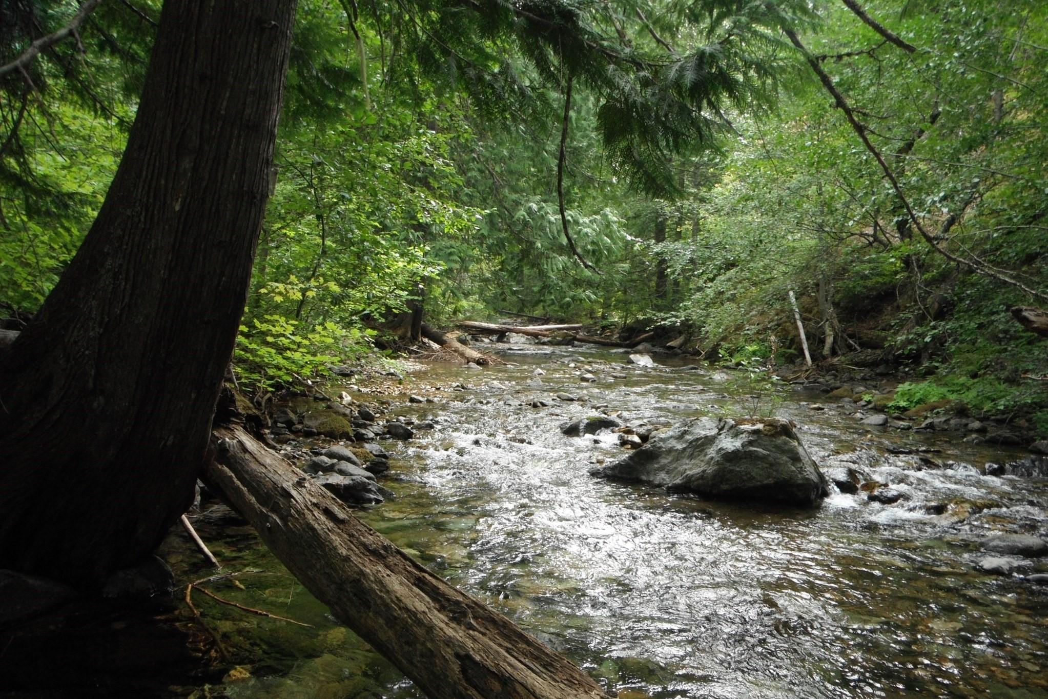 Big Creek Trail. Photo by Ups n Downs..jpeg
