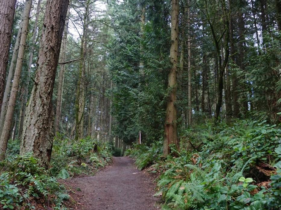 Bridle Trails State Park. Photo by Kris & Rena.jpeg