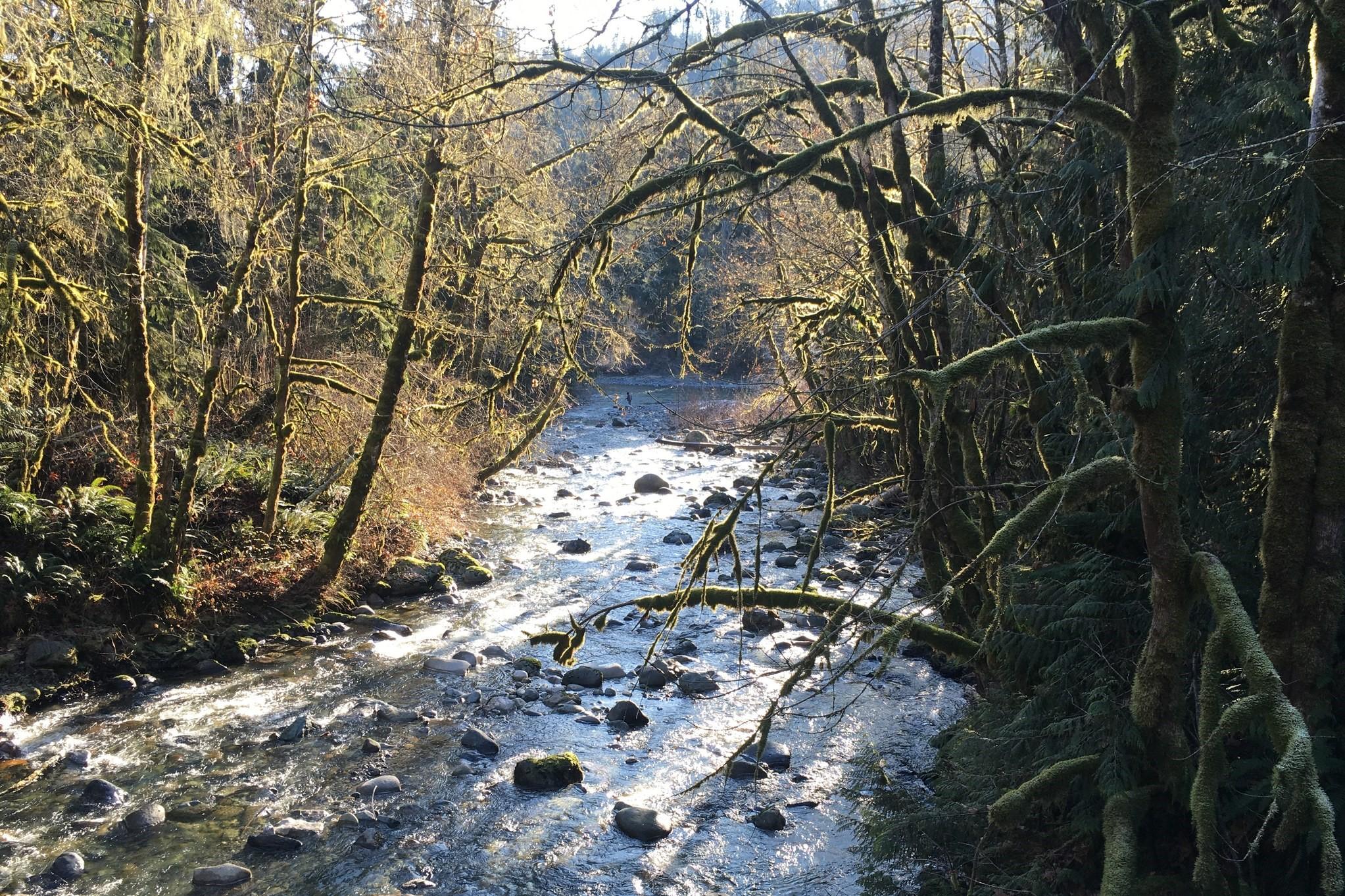 Edfro Creek Preserve. Photo by trip reporter gberry..jpeg