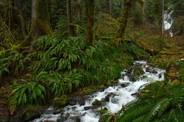 Hoh River Trail by gemhikes.jpeg