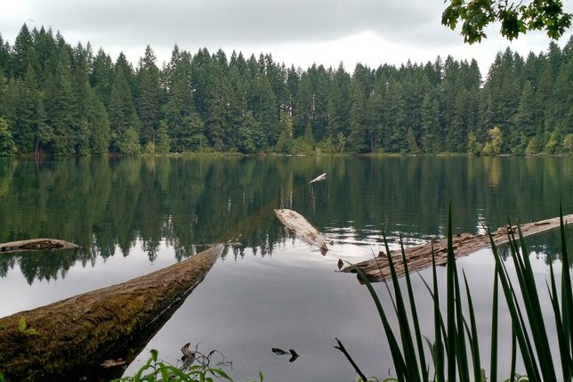 Lower Lake by rosemarylp.jpeg
