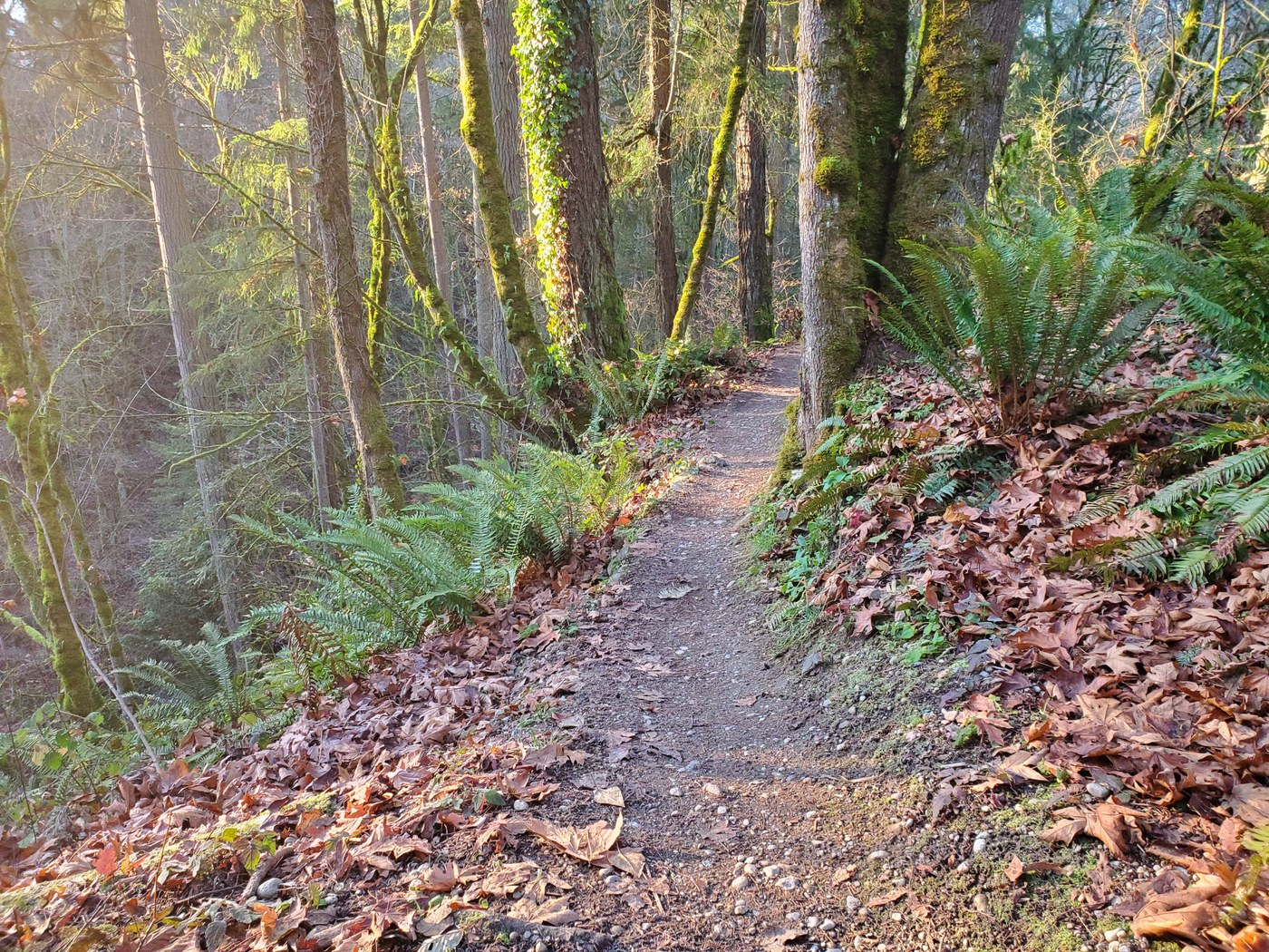 A section of trail covered in fall leaves. Photo by noirange.