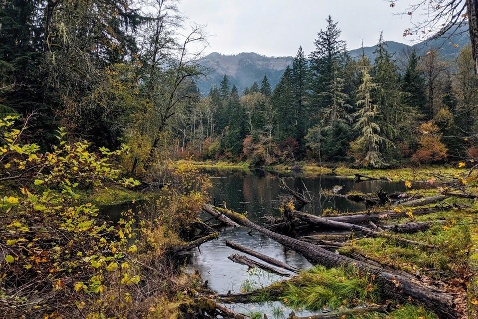 Oxbow Lake. Photo by WalkieTalkie..jpeg