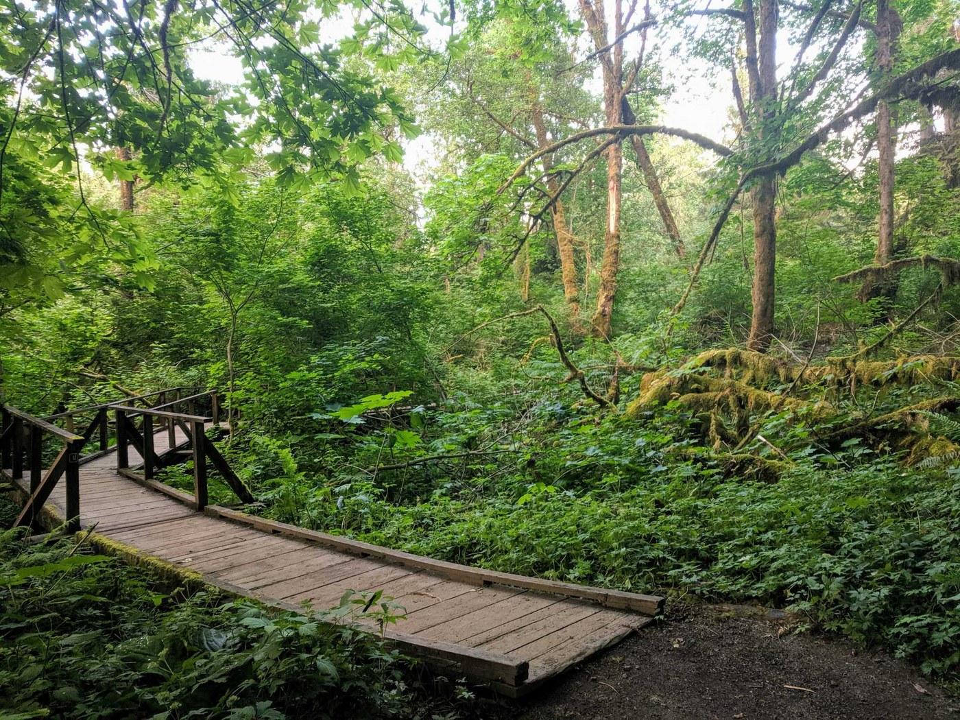 A boardwalk curves through a lush green forest. Photo by schmerica79.