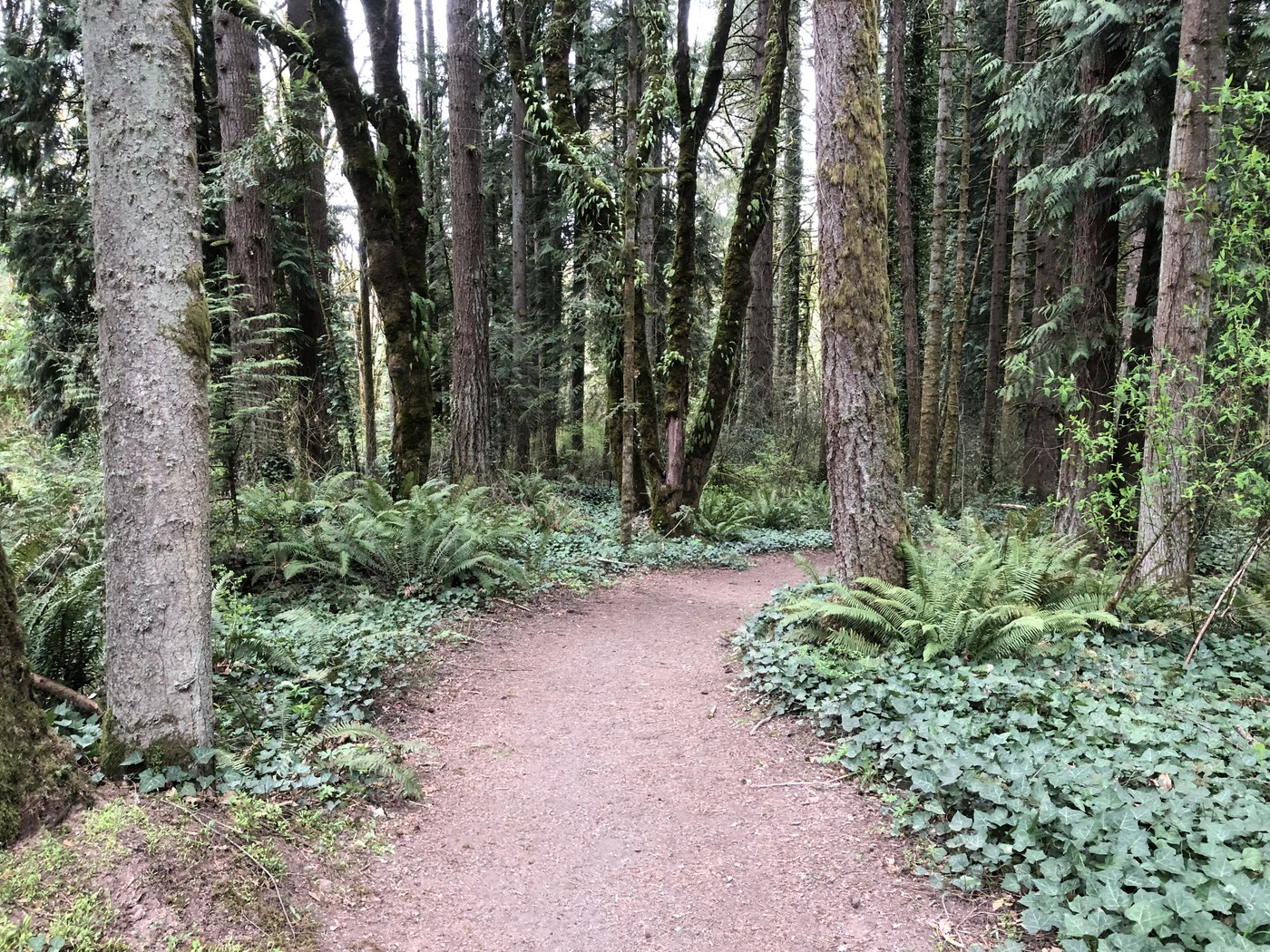 A wide trail of brown dirt leads into the trees. Photo by knchaika.