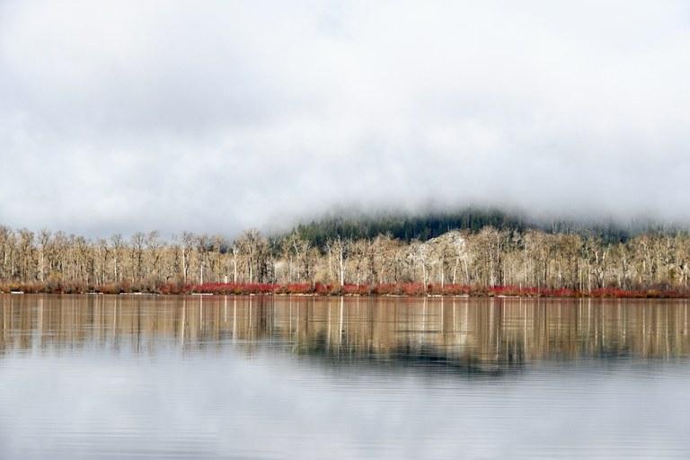 DIekema_LW Trees Clouds 2019 - 1.jpg