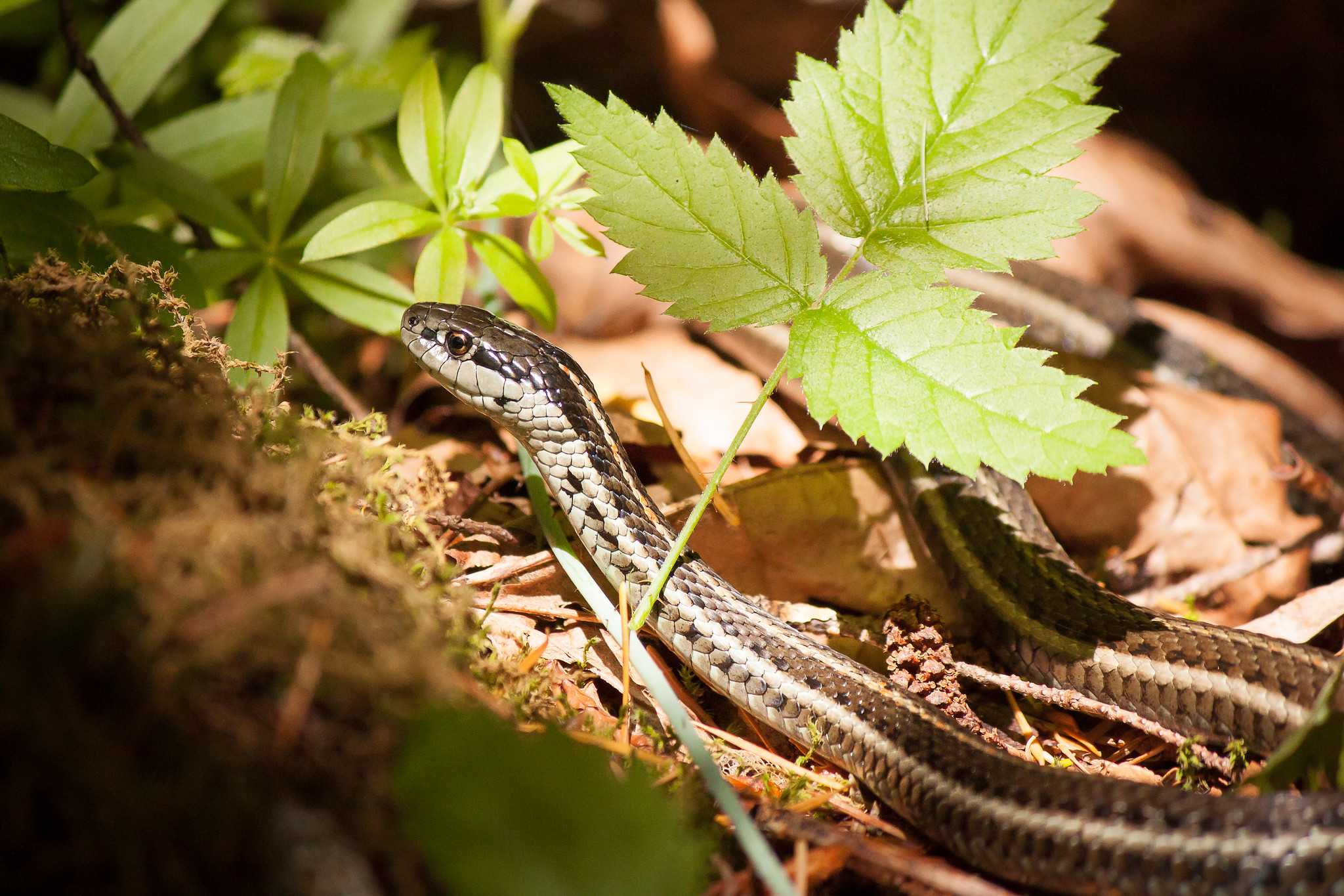 Snakes and Hiking: 5 Tips to Stay Safe & Have Fun — Washington Trails Association