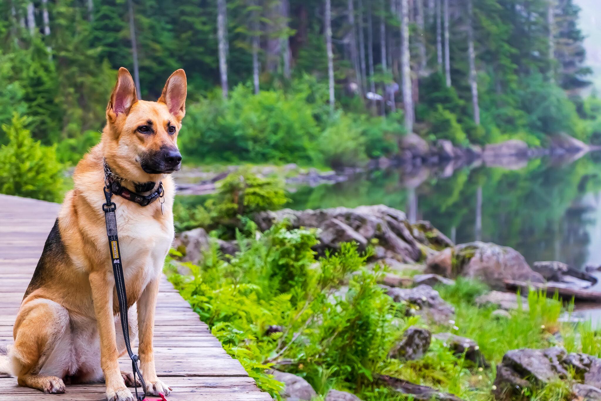 Dog sitting on boardwalk. Photo by Vignesh Yuvaraj..jpg
