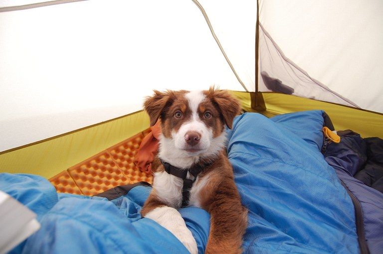 Dundee the Aussie Shepard's first backpacking trip. Photo by Raechel Youngberg.jpg