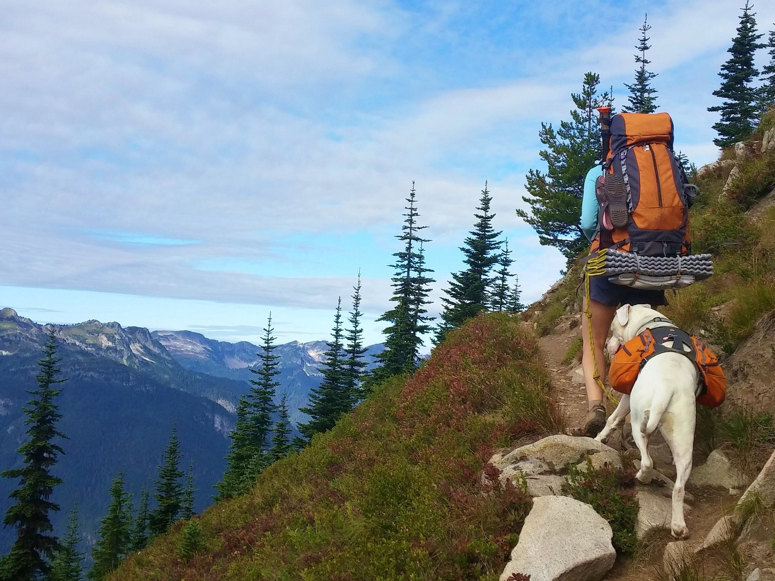 A hiker with a backpacking pack heads up a ridge with their dog on leash behind them.