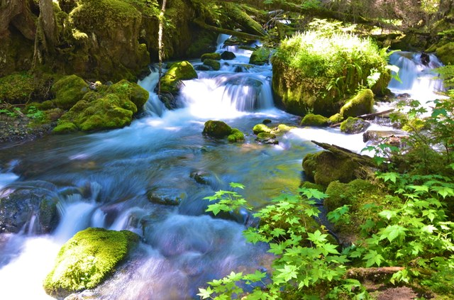 Olympic National Forest - Quilcene River