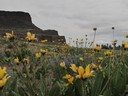 Wildflowers and Steamboat Rock