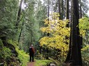A Hiker Contemplates the Beauty of the Forest