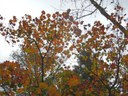 Phil's Fall Colors