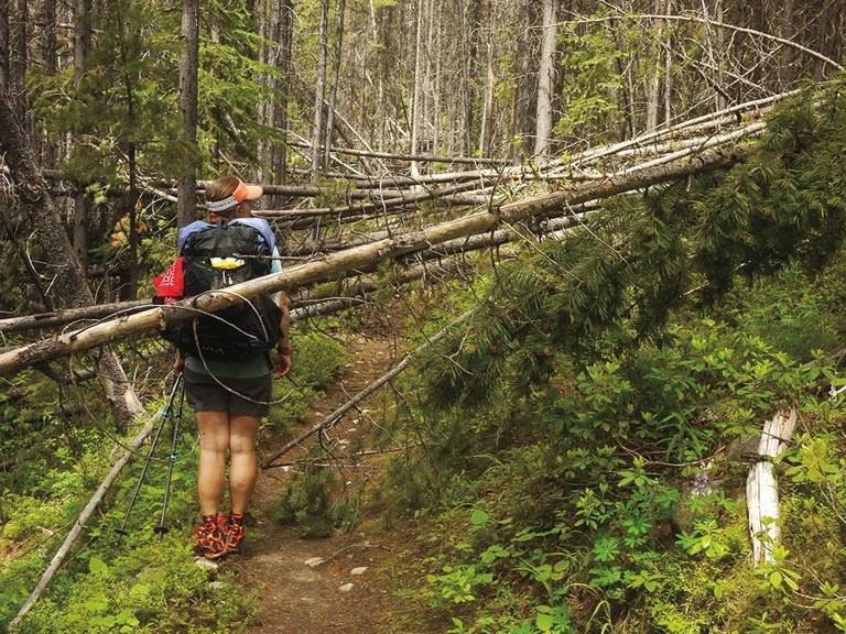 Trail block by tree. Photo by Todd Schneider.