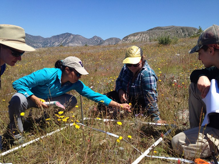 A group of researchers looks at a square vegetation plot.
