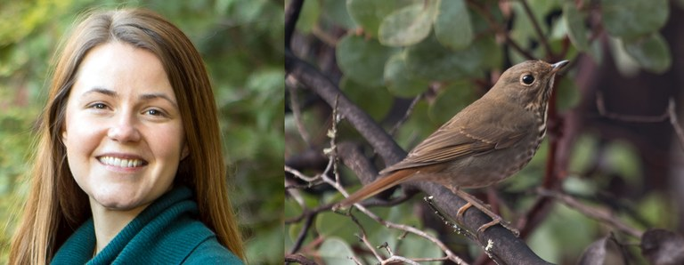 Charley Wilkinson. Photo by Mick Thompson. Hermit thrush. Photo by Peter Pearsall/U.S. Fish and Wildlife Service.