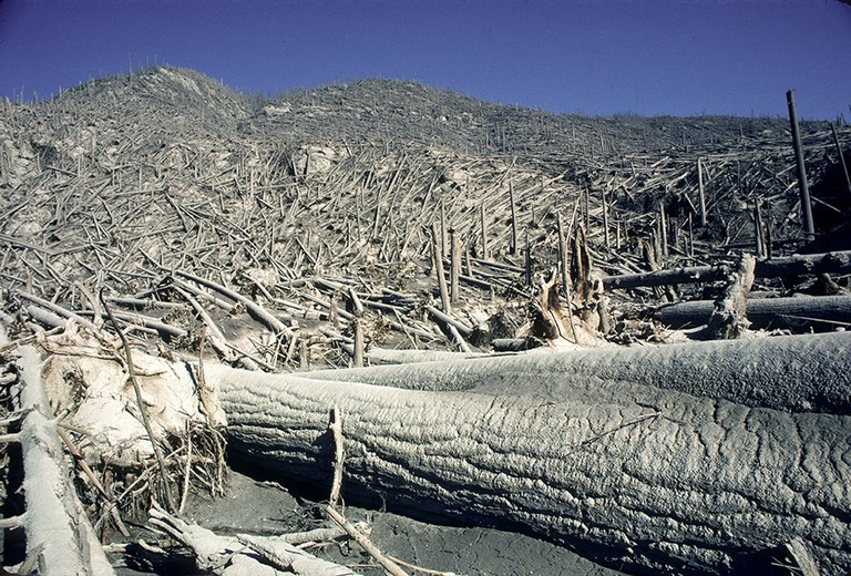 Fallen trees and ash cover the ground after the Mount St. Helens eruption.