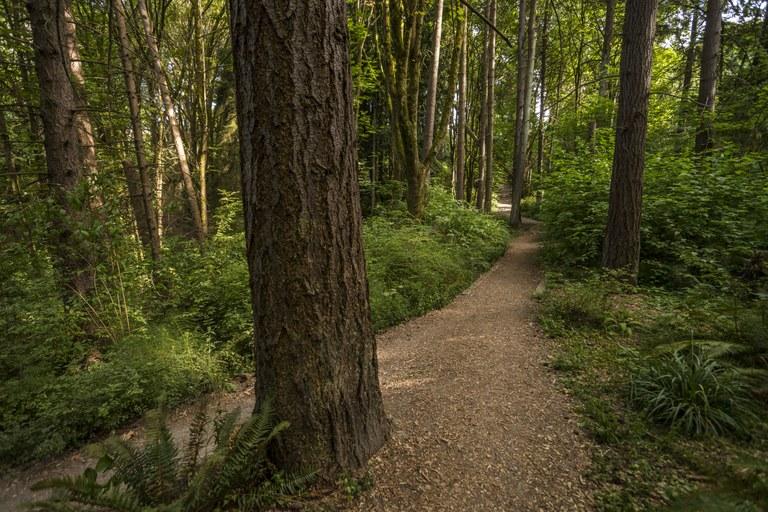 Interlaken Park. Photo courtesy Seattle Parks..jpg