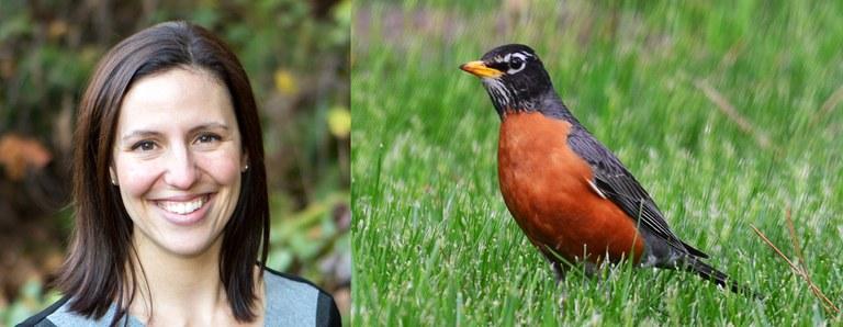 Marina Pita. Photo by Mick Thompson. American robin. Photo by Courtney Celley/U.S. Fish and Wildlife Service.