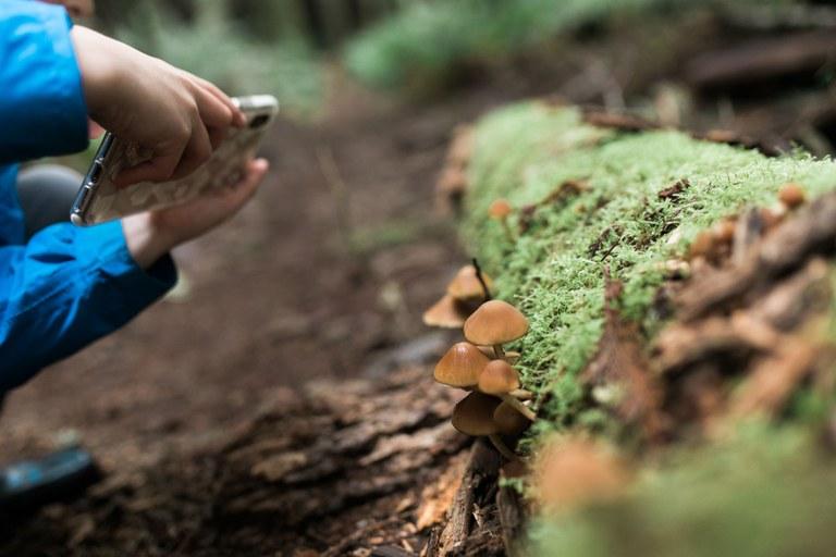 Mushrooms. Photo by Andrea Laughery.jpg