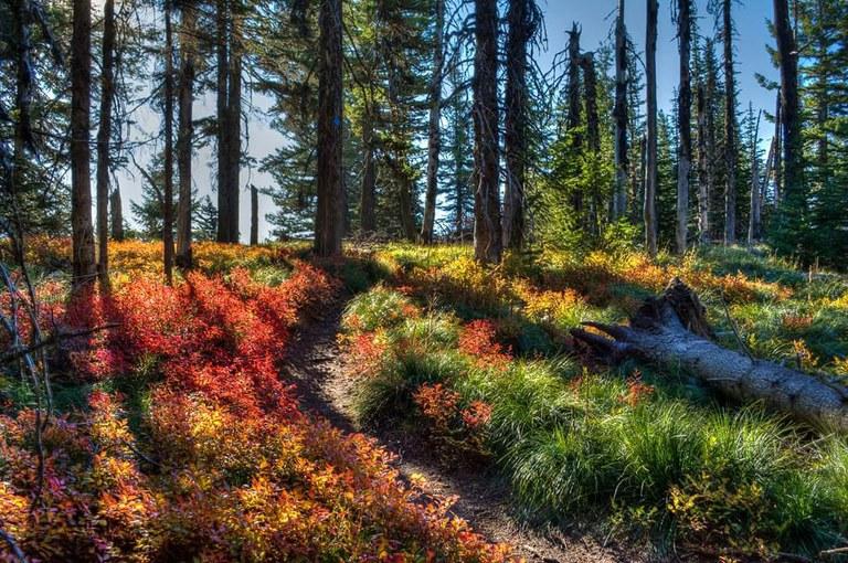 mt kit carson spokane state park Mark Ament.jpg
