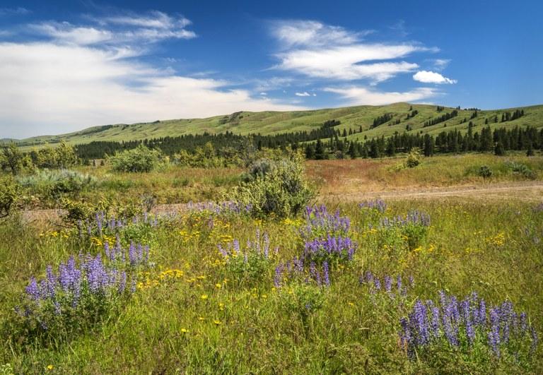 Wildflowers & Umtanum Ridge, Manastash Observatory Road_DHS0545_edited-1 copy4.jpg