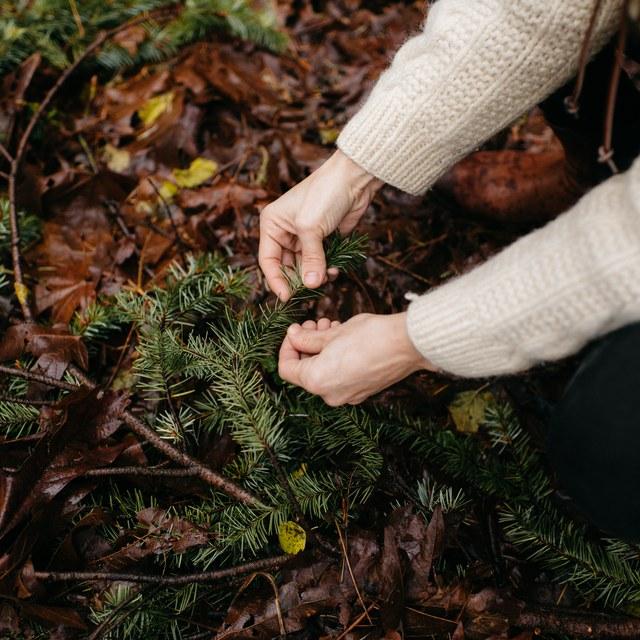 Hands on pine bough Karen Wang.