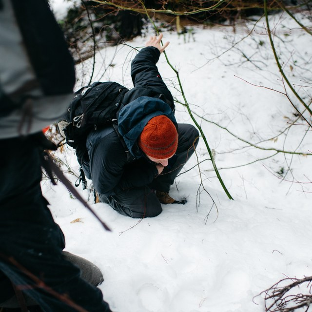 inspecting animal tracks karen wang