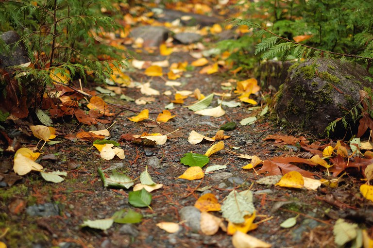 fall leaves on ground on trail