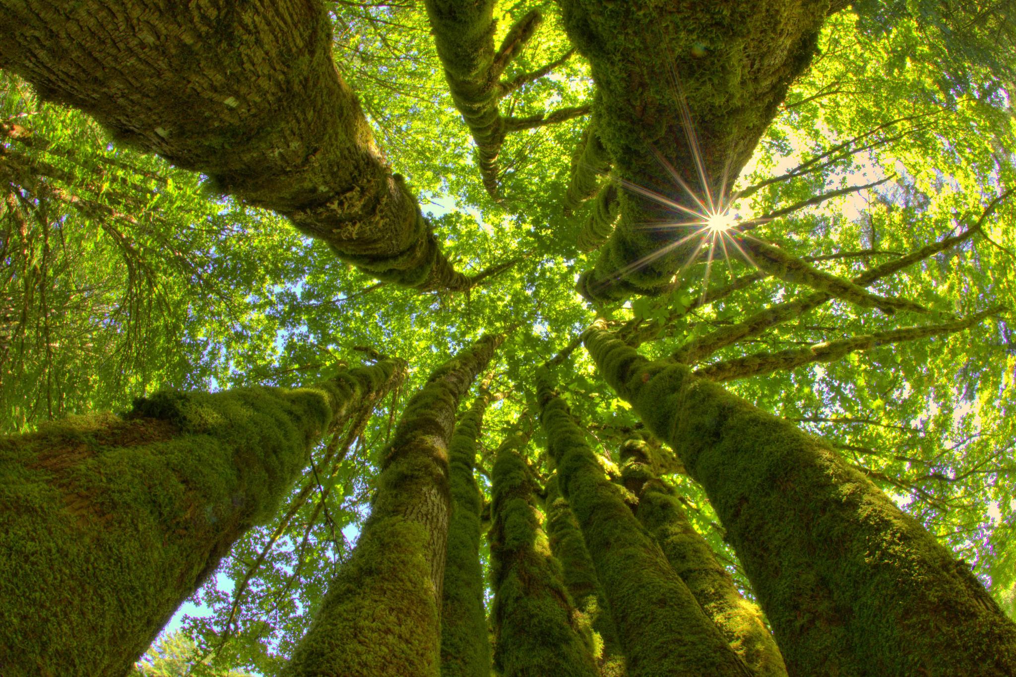 Looking up at trees by Gabor Gardonyi