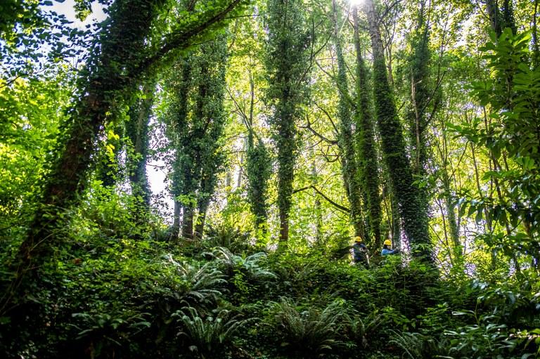 Glendale Forest, courtesy King County Parks
