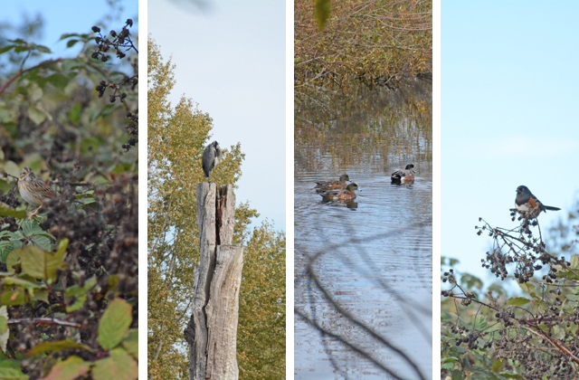 collage of birds at magnuson park anna roth