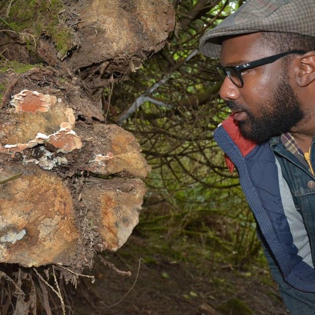 Khavin looking at fungi anna roth