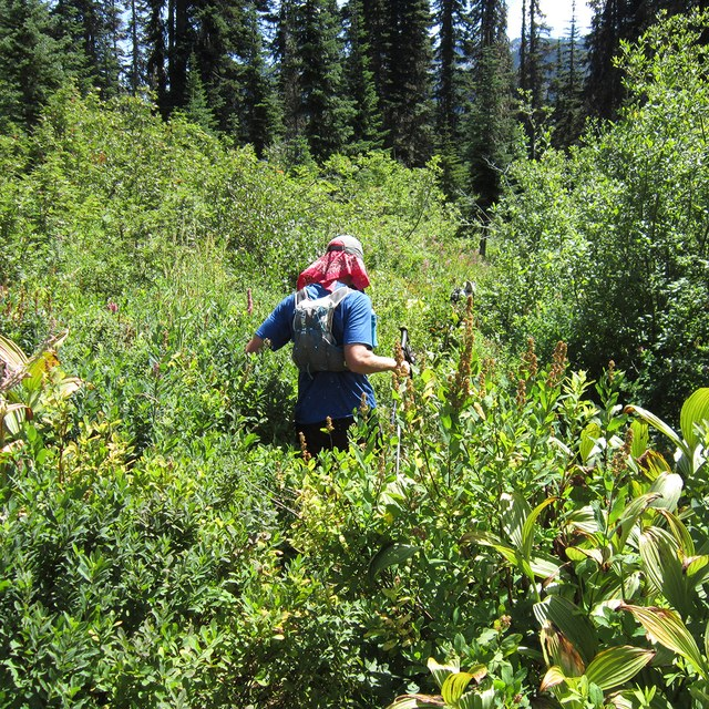 Ben Trail running Glacier Peak brush