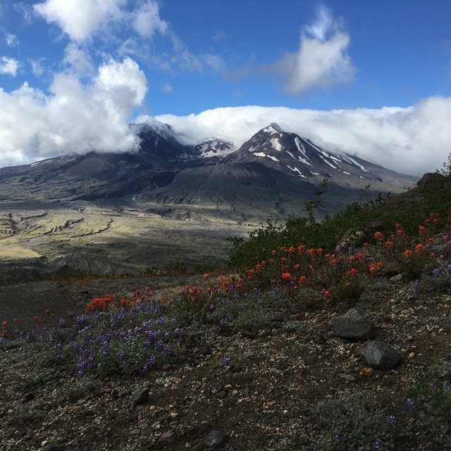 Wildflowers at Mount St. Helens