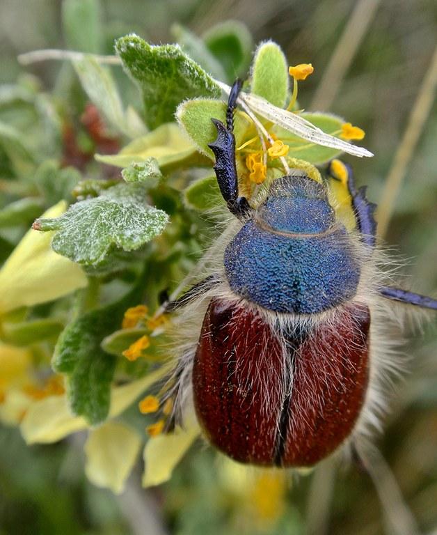 beetle_Kathy Riley.jpg